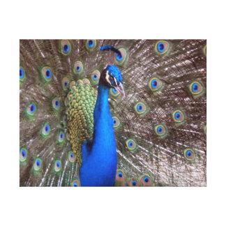 Naturaleza envuelta 11x14 de la fauna de la lona d impresiones en lona estiradas