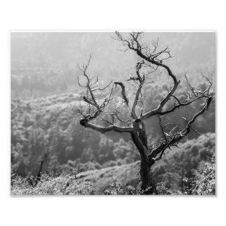 Naturaleza Fotografía