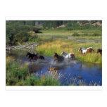 Naturaleza hermosa del destino del rancho del caba tarjetas postales