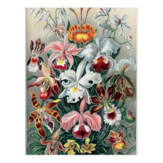Naturaleza hermosa - orquídeas tarjetas postales