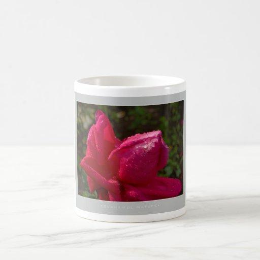 Naturaleza hermosa: Rosa rojo - taza