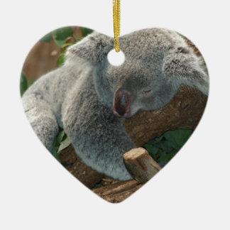 Naturaleza linda Aussi del destino del oso de koal Adorno