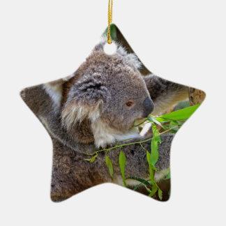 Naturaleza linda Aussi del destino del oso de koal Adornos De Navidad