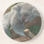 Naturaleza linda Aussi del destino del oso de koal Posavasos Diseño