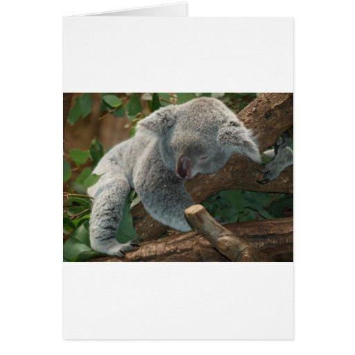Naturaleza linda Aussi del destino del oso de koal Tarjeta De Felicitación