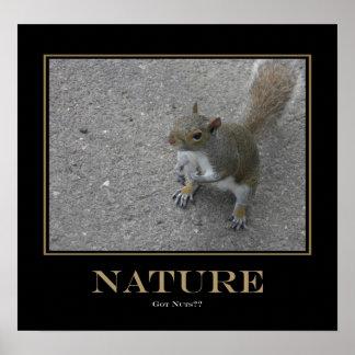 ¿Naturaleza - nueces conseguidas? Póster