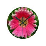 Naturaleza rosada de la flor de las margaritas de  reloj