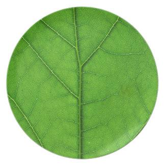 naturaleza verde de la planta de la placa de la te platos de comidas