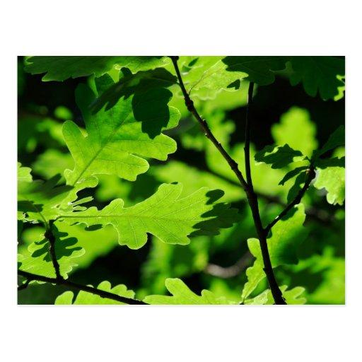 Naturaleza verde tarjeta postal