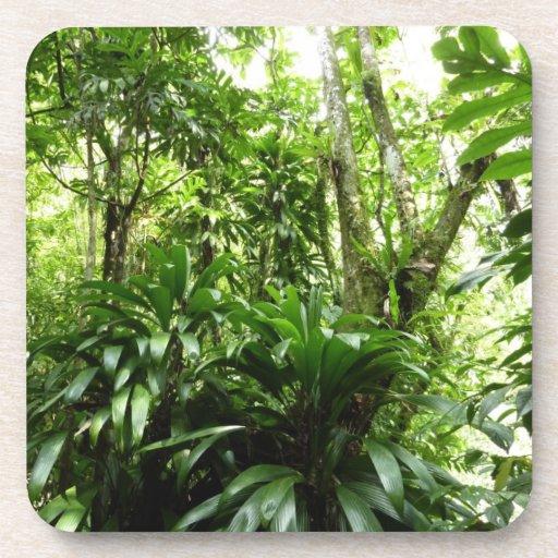 Naturaleza verde tropical de la selva tropical I Posavasos De Bebida