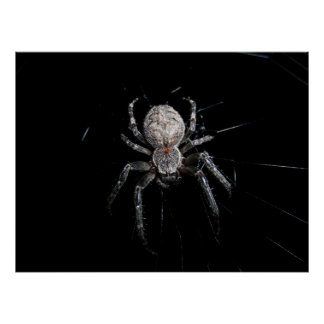 nature-373860  nature spider cobweb network insect poster