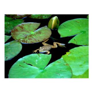 Nature Among Lilies Postcard