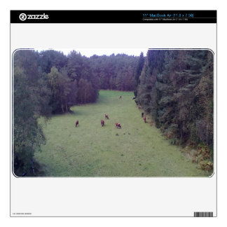 "Nature and Cow 11"" MacBook Air Skins"