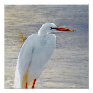 nature,animal,bird,wading,pond,wetlands,fl,florida poster