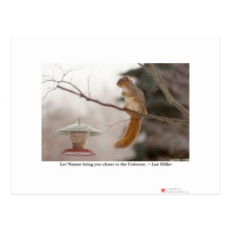 Nature/Animal Photography Gifts Tees Collectibles Postcard