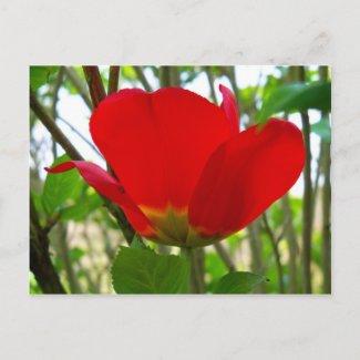 Nature at Large F2 Post Card