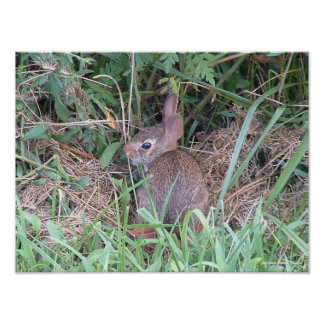 Nature: Baby Bunny Poster