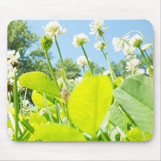 Nature beautiful sunlit white clover field. mouse pad