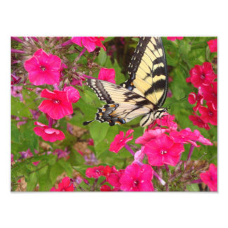 Nature Butterfly Floral Pink Photography Print Art