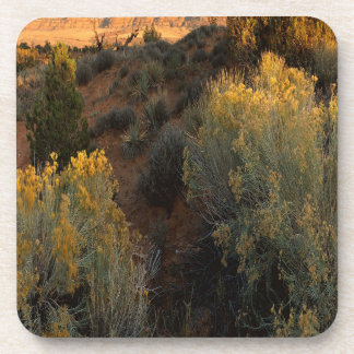 Nature Canyon Desert Brush Coaster