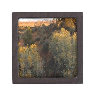 Nature Canyon Desert Brush Premium Keepsake Box