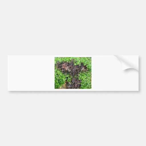 Nature Car Bumper Sticker