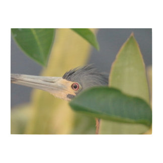 Nature: Close Up Tricolored Heron, Birchwood Print Wood Print