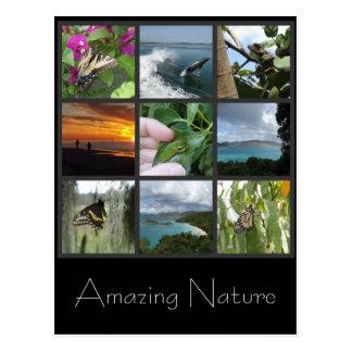 Nature Collage Postcard