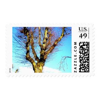 Nature Creativity Stamp
