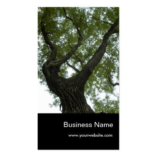 Nature/Evergreen Camphor Tree Business Card Template