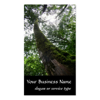 Nature/Evergreen Cypress Tree Business Card