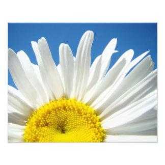Nature Floral Photography Prints Daisy Decorative Art Photo