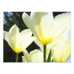 Nature Floral Photography Tulip Flowers art prints Photo Print
