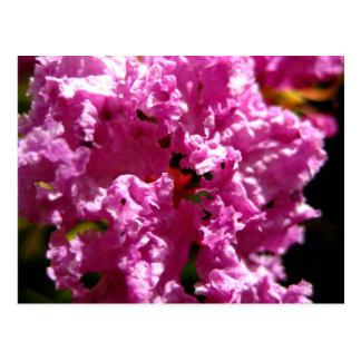 Nature - Floral Pink Flower Postcard