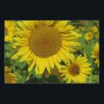 "nature, flower, summer, sunflower, blossom, floral lawn sign<br><div class=""desc"">nature,  flower,  summer,  sunflower,  blossom,  floral,  yellow,  green,  sun, country</div>"