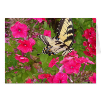 Nature Flowers Pink Butterfly Photography Card Art