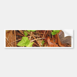 Nature Forest Floor English Ivy Rainy Leaves Car Bumper Sticker