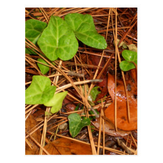 Nature Forest Floor English Ivy Rainy Leaves Postcard