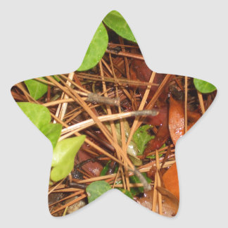 Nature Forest Floor English Ivy Rainy Leaves Sticker