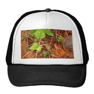 Nature Forest Floor English Ivy Rainy Leaves Trucker Hat