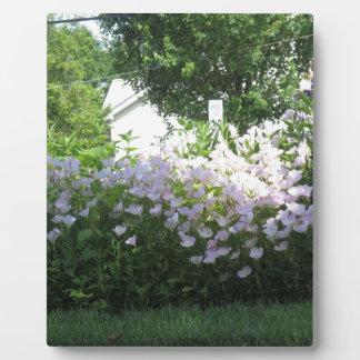 Nature Garden Flower CherryHill NewJersy NVN668 FU Display Plaque