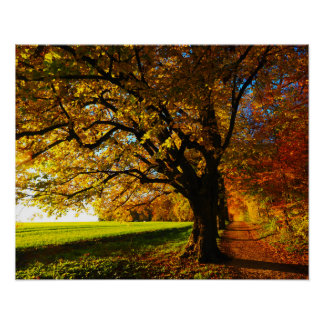 nature gold tree poster