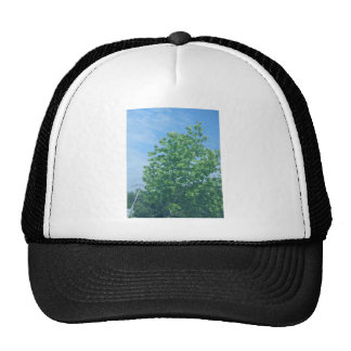 Nature Green Tree Environment Cause NVN674 GIFTS F Trucker Hats