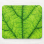 nature green tree leaf texture mouse pad