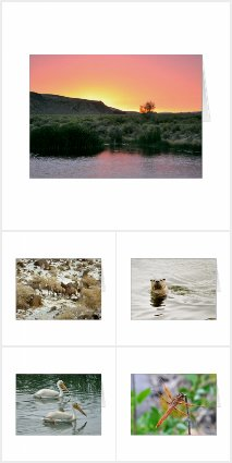 Nature greeting card collection