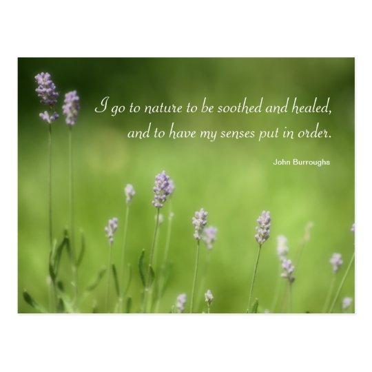 nature heals lavender photography  u0026 quote postcard