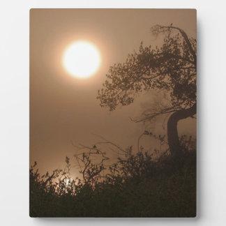 Nature Images Plaques