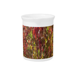 Nature images wild warm patterns seasonsGreetings Pitcher