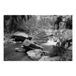Nature in black & white poster
