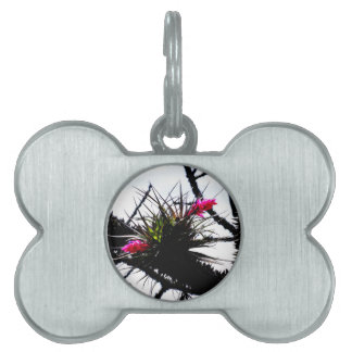 Nature in Rio Pet Tags